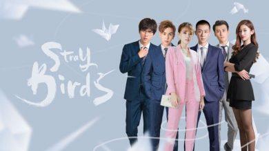 ซีรี่ย์จีน Stray Birds (2021) อลวนคนไอที ซับไทย Ep.1-40 (จบ)